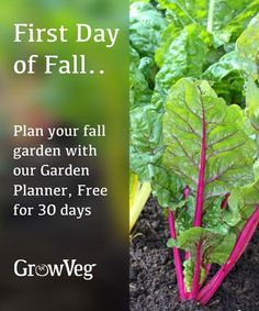 The first day of fall celebrate by trying the Garden Planner from growveg.com for free for 30 days to plan your best ever fall garden.