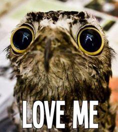 I shall, tiny owl with large eyes.