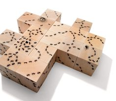 Ant Blocks