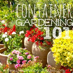 Container Gardening 101   Beginner's Guide to Container Gardening Awesome guide on container gardening, including plant lists and edibles!