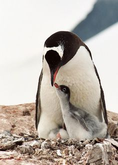 http://www.GraphicDesignNYC.net Antartica