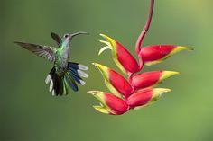 gorgeous hummingbird