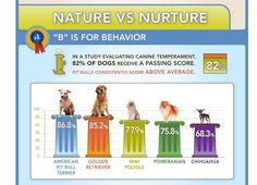 Temperament scores of some common dog breeds. pit bull, dog breeds