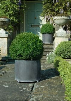 boxwood in faux lead pots  - like the round