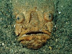 Scary Fish face!