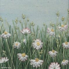 Daisies in May by Jo Butcher