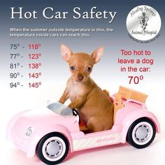 It is beginning to be that time of year again...PLEASE DO NOT TAKE PETS in the car unless they can go in the establishment with you!