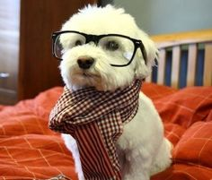 what a smart lookin' pup