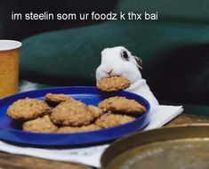 funny animals, cookie monster, animal pictures, rabbits, funni, bunni, baby animals, cookie jars, cookies