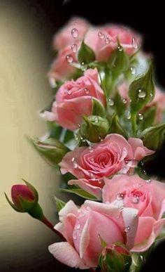 Rosas e Naturezas: Foto