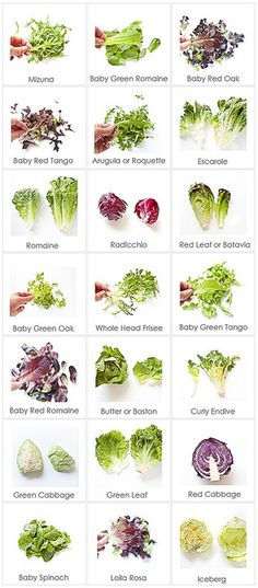 Food Cheat Sheet: Lettuce Varieties & Names