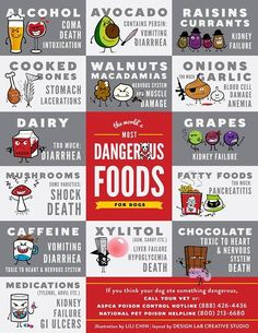 Dangerous foods to dogs - some I would have never known!