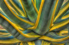 Google Image Result for http://www.betterphoto.com/uploads/processed/0802/0801081711071large_plant_tonemapped.jpg
