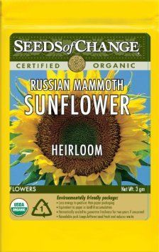 REVEL: Sunflower Seeds