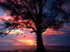 The old pine as the red sky blooms, Courtesy of FtLauderdaleSun