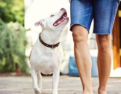 How to take meaningful photos of your dog. >>> Great tips! #PinUpLive