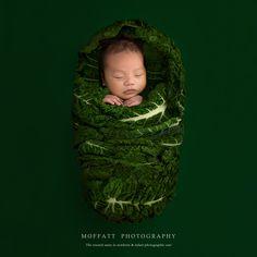 Silverbeets baby #Silverbeets #Newborn #Love #MoffattPhotography