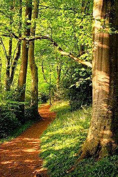 Wayford Woods, Somerset, England