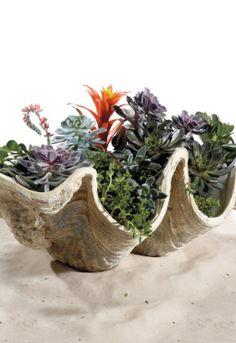 Giant Clam Shells Floral Decor.