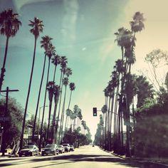 palm-trees-against-blue-skies-in-los-angeles