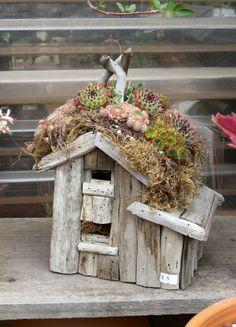 cute idea for growing succulents