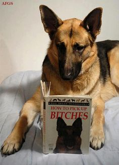 dog is reading a book