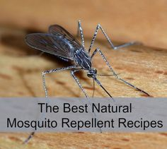 The best natural mosquito repellents for summer. Stay bite-free and chemical-free this year!