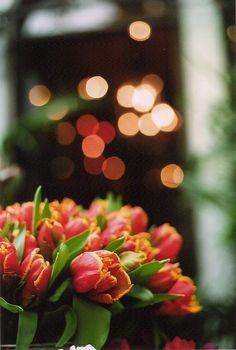 ..tulips...