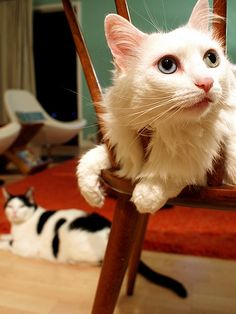 """""""You haven't lived until you have lived will h a cat."""" --Doris Day"""