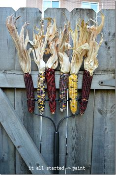 Quirky outdoor fall display, corn on rake. #autumn #thanksgiving #fence #gate #decor #garden #country #rustic #farm