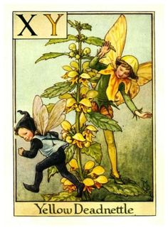 cice mari, mari barker, flowerfairi, yellow deadnettl, alphabet, flowers, flower fairies, cicely mary barker, print