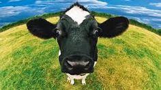 Fingerplays  Action Rhymes: Animals on the Farm farm unit, the farm