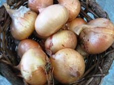 slice onion, kitchen garden, garden pool