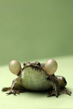 frog cheeks!