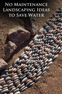 No Maintenance Landscaping Ideas that Save Water