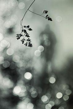 A stranger in the light byHelle Lorenzen