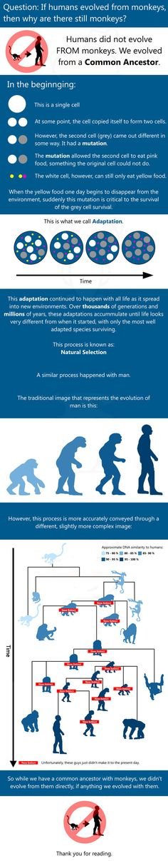 If humans evolved from monkeys...
