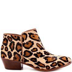 S Petty - Leopard Brahm main view