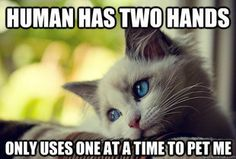 First World Cat Problems - combining two of my favorite memes