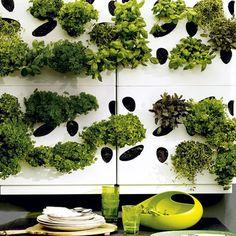 herb garden wall