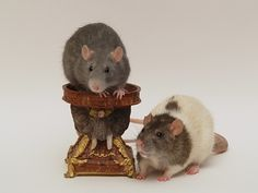 How to Make Rat Costumes