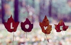love fall leaves, autumn leaves, letter, art, fall decorations, autumn falls, alaska vacation, inspiring pictures, black