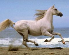 beaches, horse pictures, the ocean, at the beach, photography tips, horse photography, horse photos, arabian horses, wild horses