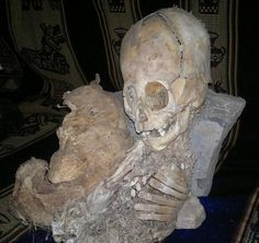 """Peruvian anthropologist Renato Davila Riquelme discovered the remains of an unidentified creature which several anonymous Spanish and Russian scientists claim to be an """"alien skull,"""" international news sites reported on Tuesday, November 22, 2011. According to reports, the """"alien skull"""", as shown above, was described as having a triangle-shaped skull with its head as big as its body."""