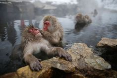 These Monkeys Are Having the Best Spa Day Ever!