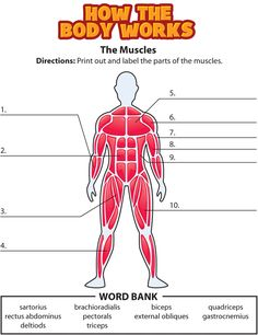 Science How the Body Works also has a ton of videos on the human body
