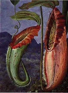 Marianne North botanical illustration