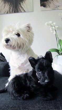 Ronja and Snooki
