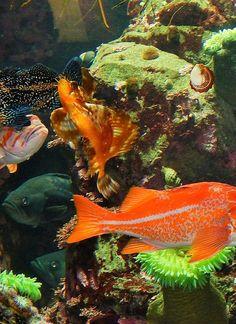 stanley park, park aquarium