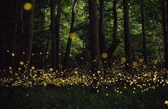 The Beautiful Flight Paths of Fireflies | Arts & Culture | Smithsonian
